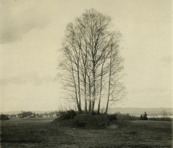 En kulle bevuxen med björkar. Foto från 1920-tal.