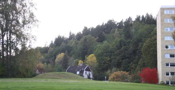 En kulle med ett berg av träd i bakgrunden.