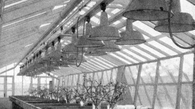 Svartvitt foto på interiören från en av de två växthusen.