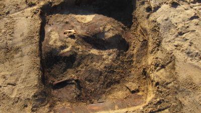 Framgrävd grav gjord för en katt eller hund. Delar från trälådan syns vid kanterna, några olika ben syns också.