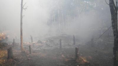 Skogsbryne med stubbar som brunnit ner. Tjock rök är i luften.