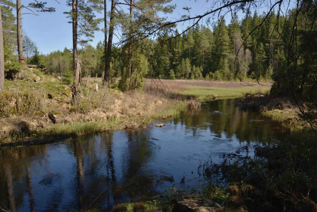 Dammen uppströms flottningsrännan.