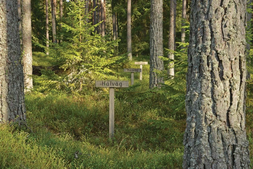 Utstakad hålväg ingående i Eriksgatuleden.