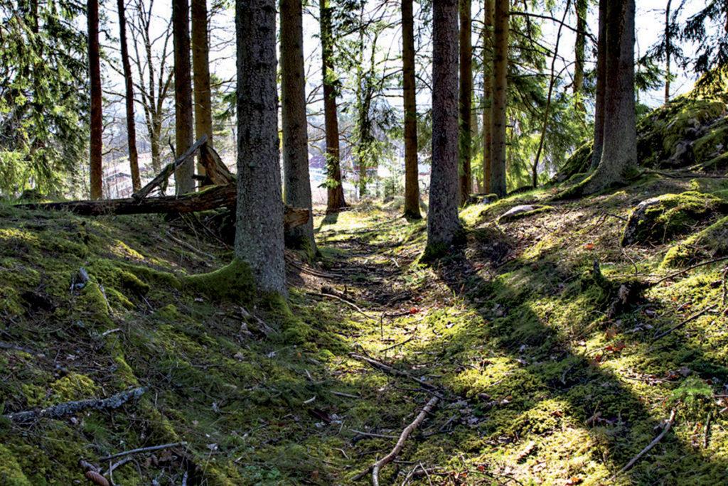 Hålvägen framkommer som ett dike i naturen.