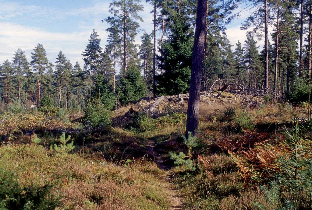 Ett av de många gravrösena som ligger på höjderna väster om Stråken.