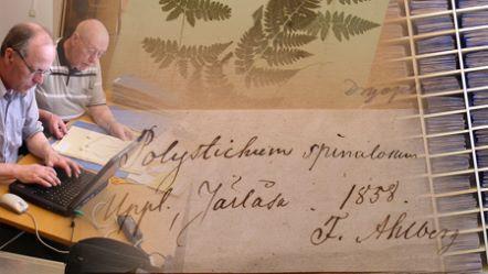 Bild för herbarium