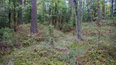 Skogsmiljö med mossa på marken. Marken består av kullar. Här växer även träd.