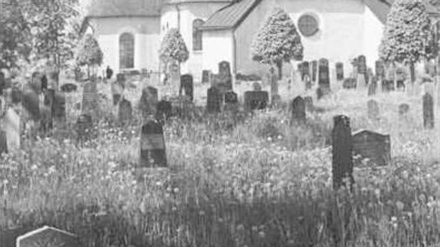 Ett vildvuxet gräs. I det vildvuxna gräset står det gravstenar.