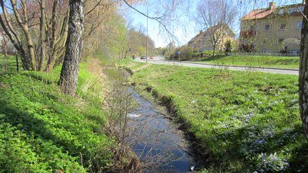 En bäck som rinner vid ett bostadsområde.