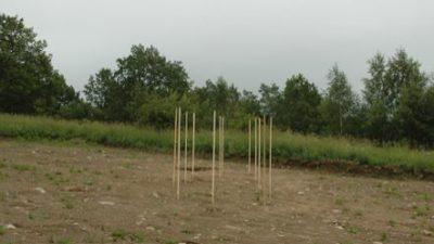 En plan jordig mark. Ur marken sticker det upp käppar.