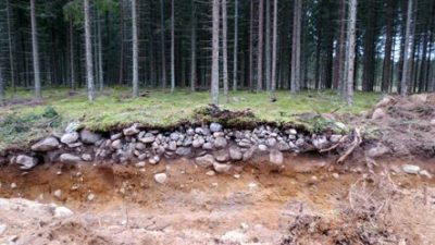 En skog som visar ett röjningsröse i genomskärning.