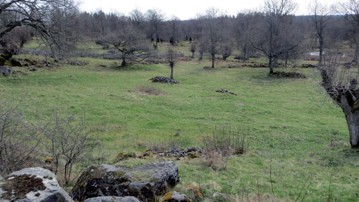 Foto över Högarps by med hamlade träd.