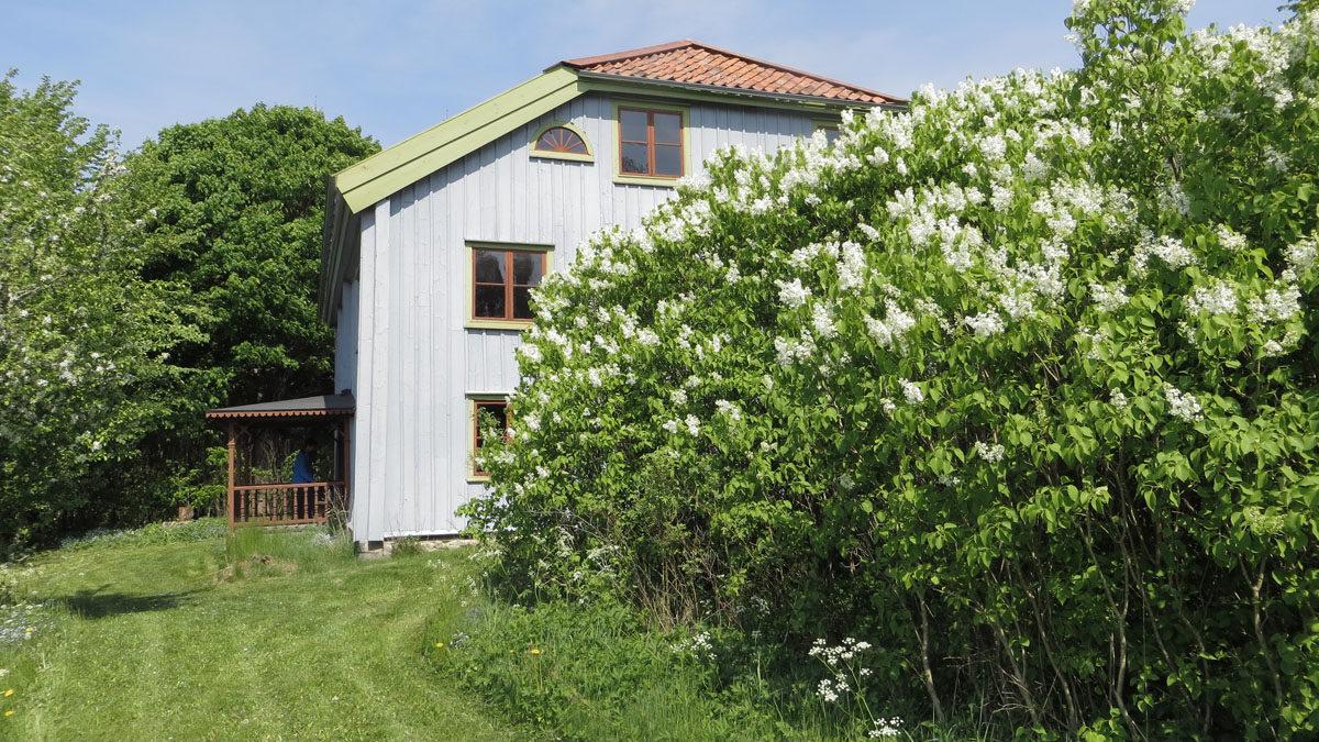 En husgavel med en blommande syrénbuske i förgrunden.