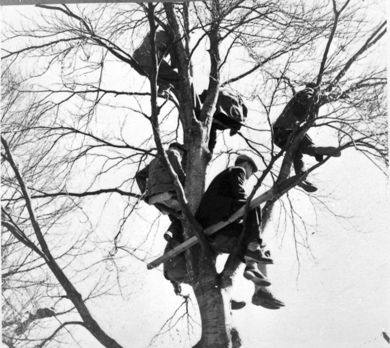 Personer som sitter i ett träd.