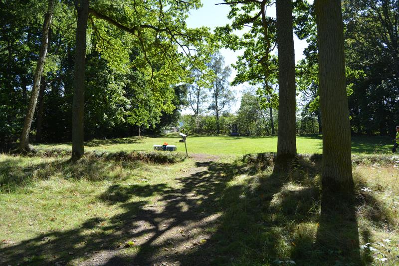 Grönskande glänta mellan stora ekar, en lugn och stilla plats.