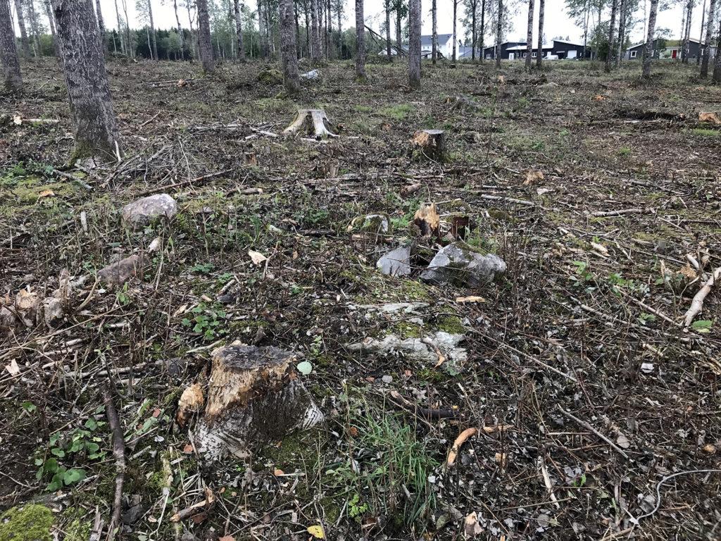 Stenformation i ett avverkat skogsområde