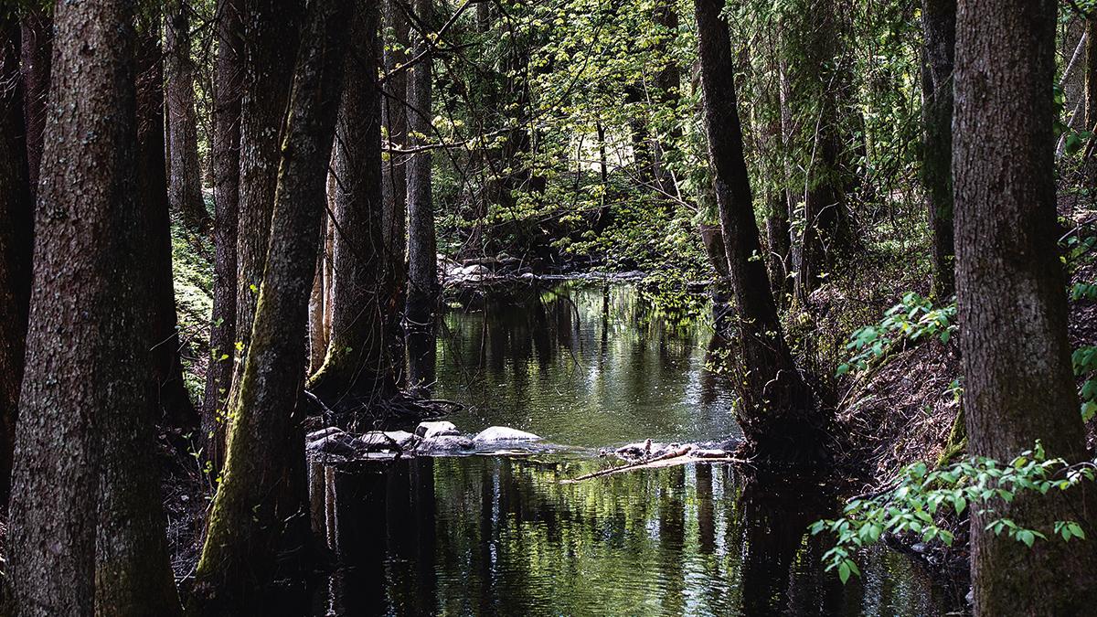 En å flyter omgiven av grönskande träd