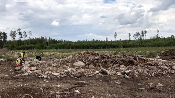 Vy från en arkeologisk undersökning, stenar, rötter, skog i bakgrunden